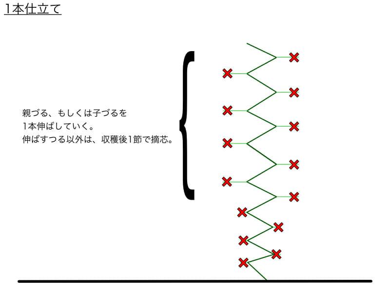 キュウリのつる下ろし栽培における1本仕立てのやり方の例を示した画像です。