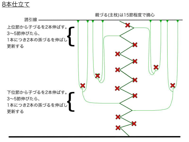 キュウリのつる下ろし栽培における8本仕立てのやり方の例を示した画像です。