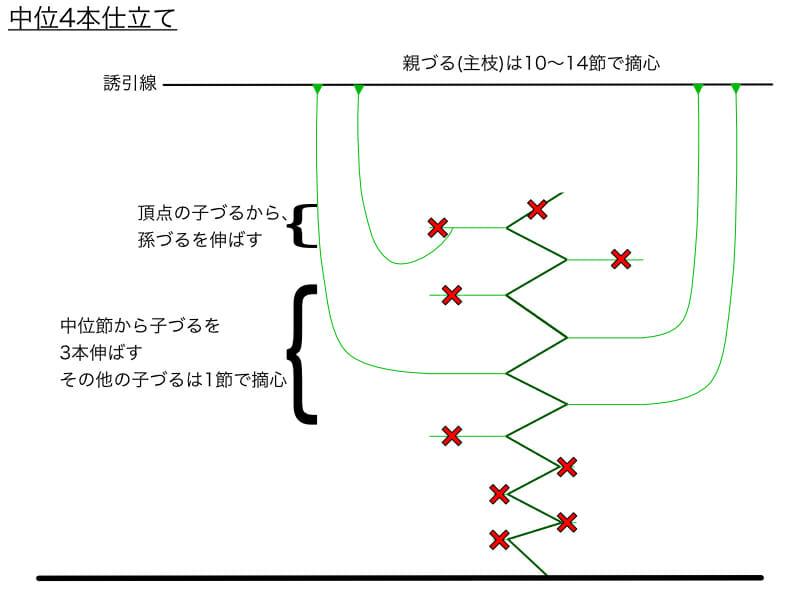キュウリのつる下ろし栽培における中位4本仕立てのやり方の例を示した画像です。