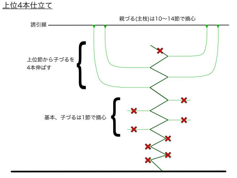 キュウリのつる下ろし栽培における上位4本仕立てのやり方の例を示した画像です。