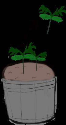トマトの間引き