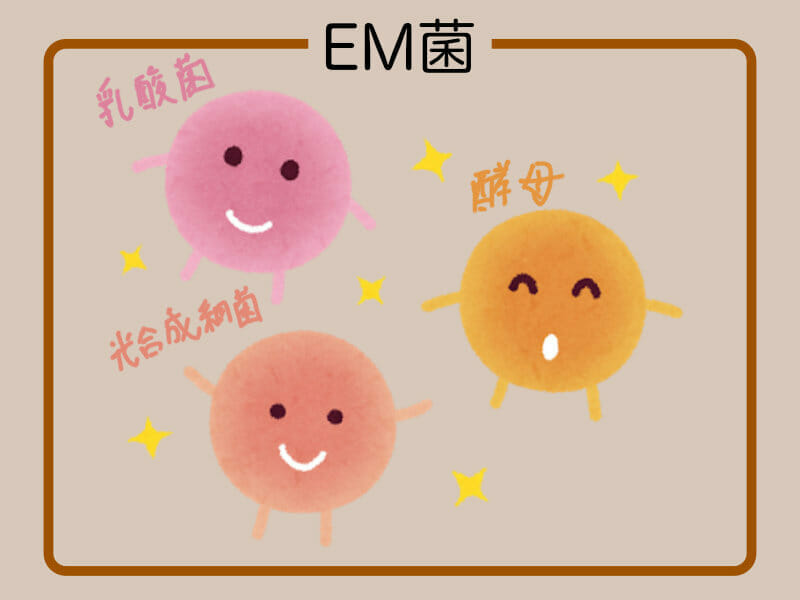乳酸菌、酵母、光合成菌などEM菌のイメージ