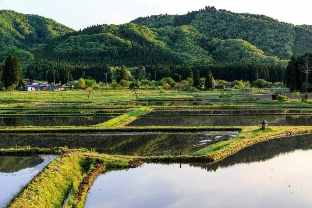田んぼに水を張った状態の写真
