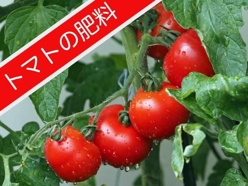トマト栽培の肥料について知りたい方向けのバナー