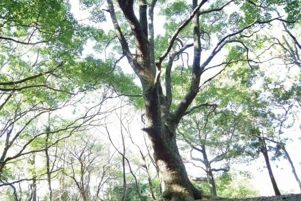 木漏れ日のある雑木林