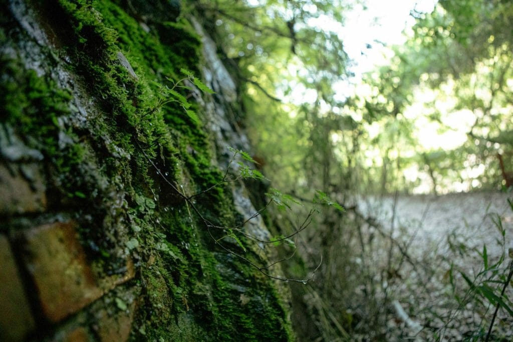壁に生える苔