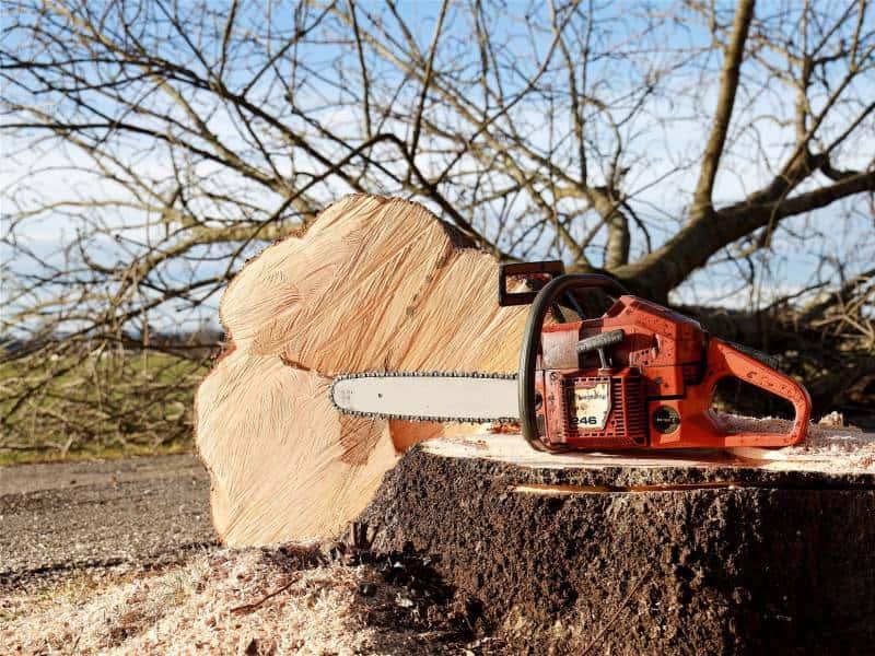 大木を切り倒すエンジンチェンソーの写真
