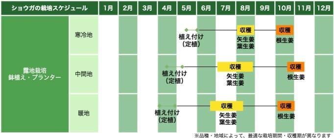 生姜(ショウガ)の栽培スケジュール