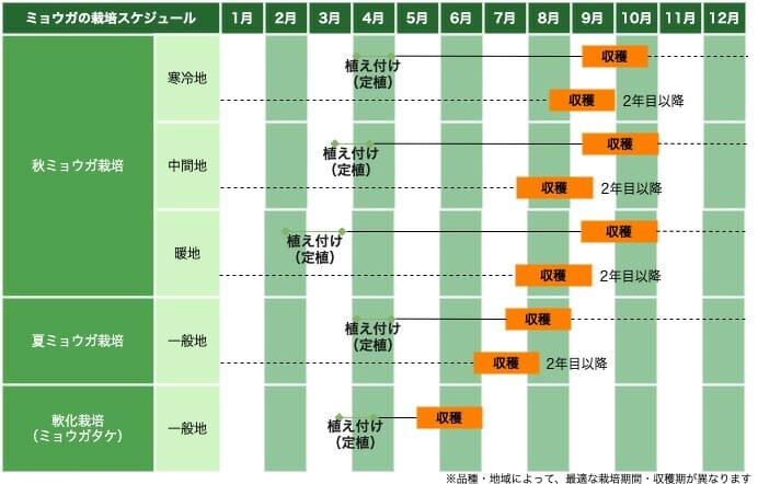ミョウガの栽培スケジュール
