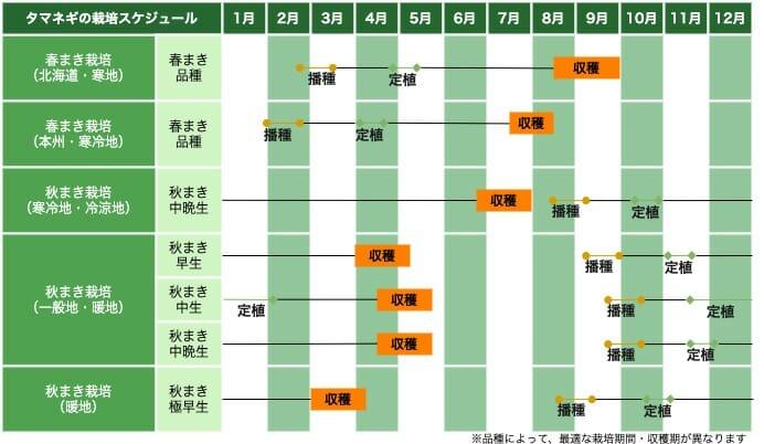 タマネギの栽培スケジュール