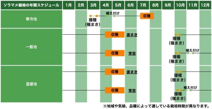 ソラマメ(空豆)の栽培スケジュール