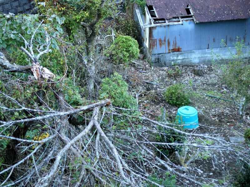 災害で倒れた樹木の写真