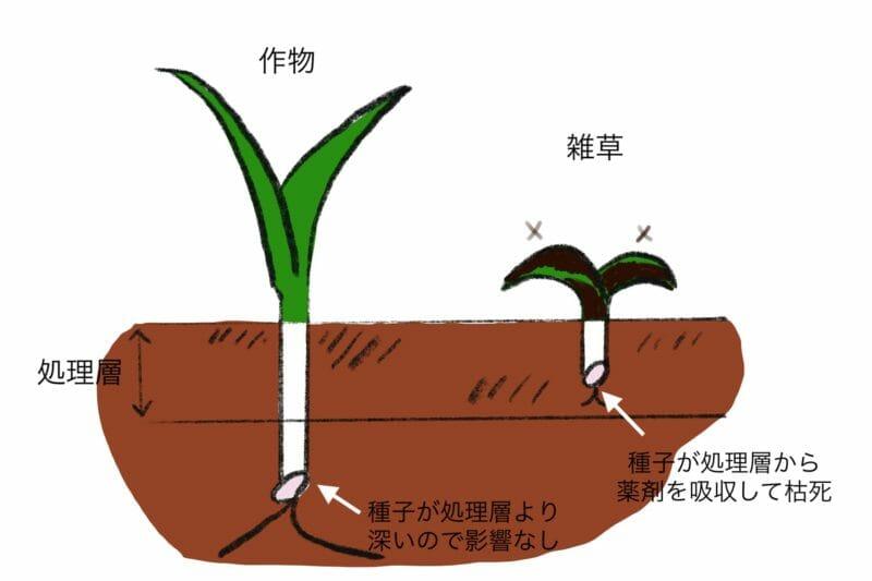 土壌処理剤の雑草抑制の仕組みを図で表しています