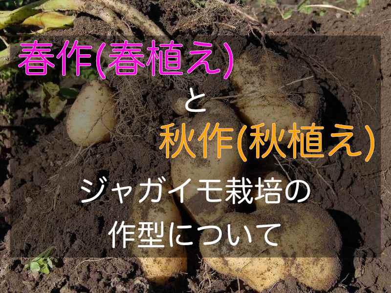 ジャガイモの春作、秋作のバナー