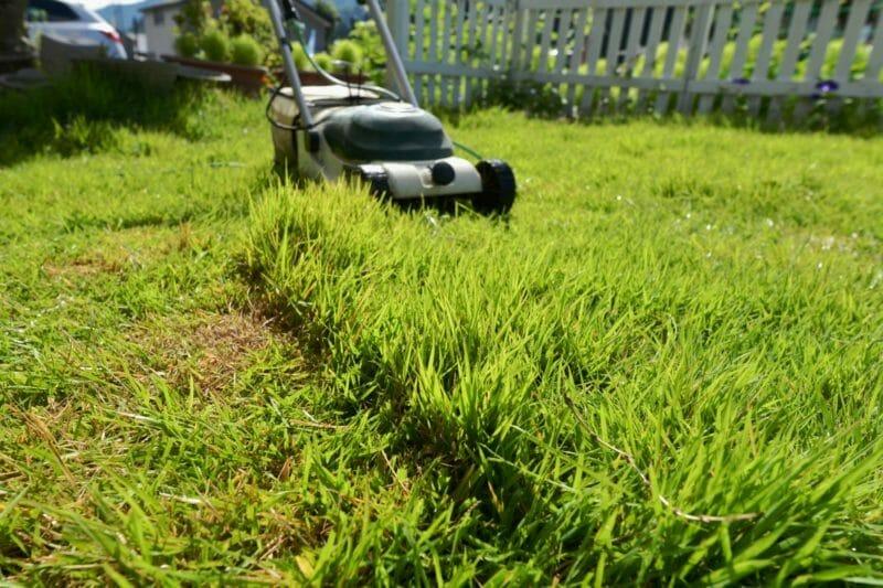 電動式芝刈り機で芝を刈っている写真