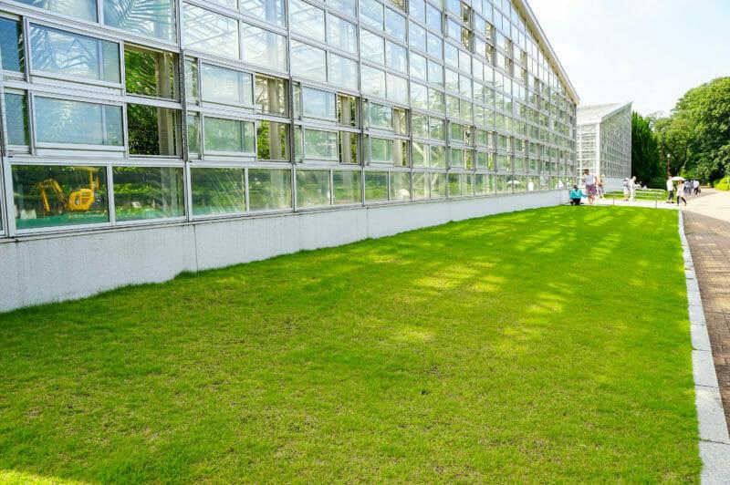 手入れされた芝生の写真