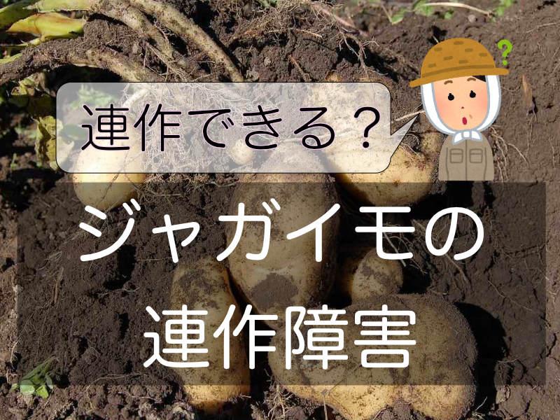 ジャガイモの連作障害に関するバナー