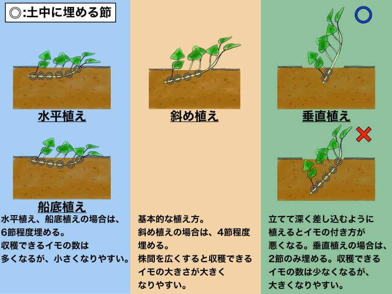 サツマイモの植え付け方の種類