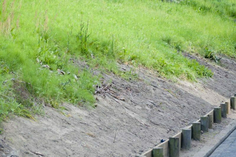 除草剤を撒く前の空き地