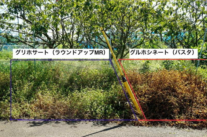 グリホサート系とグルホシネート系の除草剤を散布した結果の写真