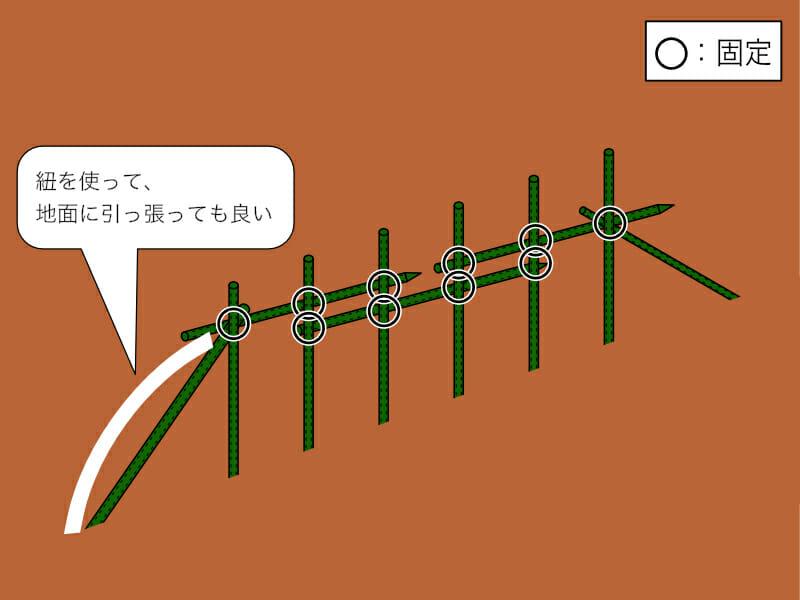 畝が長い場合の直立式の支柱の立て方と固定の箇所を示した画像です。
