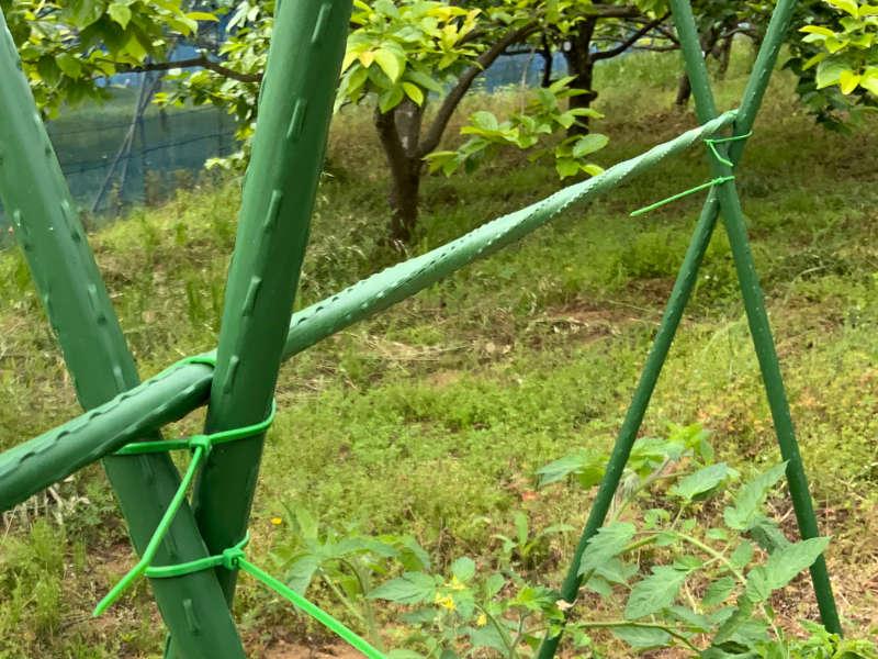 ケーブルタイで園芸支柱を固定している画像です。