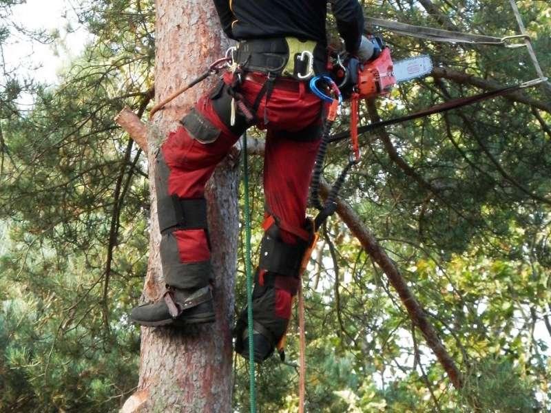 ロープやハーネスを装着して、樹上でチェンソーを用いた枝打ち作業をしている画像