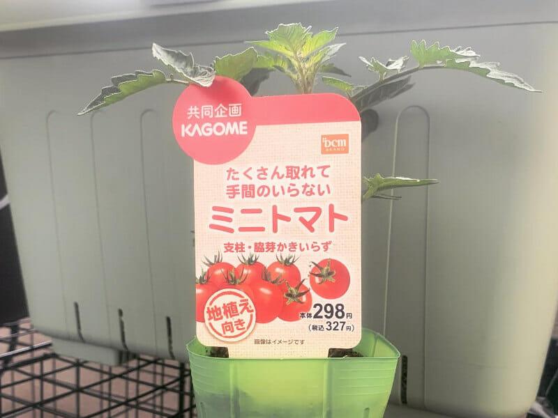 放任栽培ができる芯止まり性品種のミニトマトの苗です。