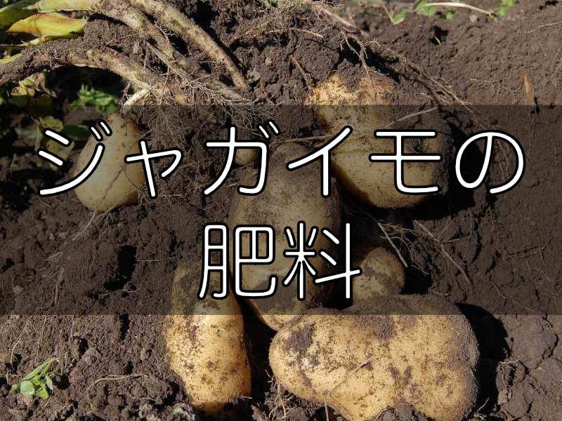 ジャガイモに関する肥料の記事のバナー画像です。