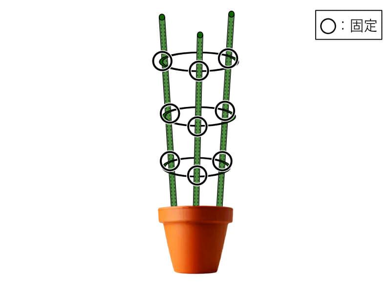 プランターや鉢植えによく使われるリング支柱の立て方と固定の箇所を示した画像です。