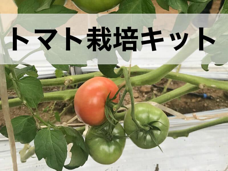 トマト栽培キットの記事のバナーです。