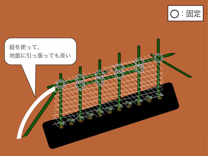 園芸支柱を直立式に組み、ネットを張った様子を示したイラストです。キュウリの誘引がしやすくなります。