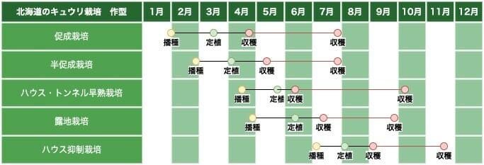 北海道地方のキュウリ栽培の作型の例です。