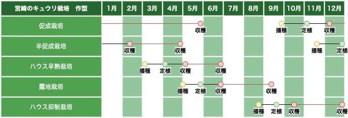 九州・四国南部地方(宮崎)のキュウリ栽培の作型の例です。