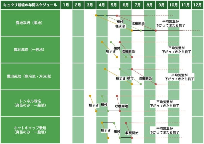 キュウリの栽培スケジュールを示した画像です。