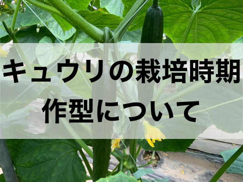 キュウリの栽培時期、作型に関する記事のバナーです。