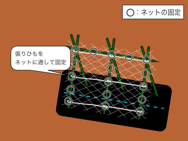 きゅうりネットの張り方を示した画像です。横に張りひもを通します。