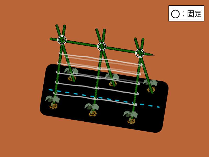 園芸支柱を合掌式に組み、紐を張った様子を示したイラストです。ネットがない場合には、ビニール紐でも代用できます。