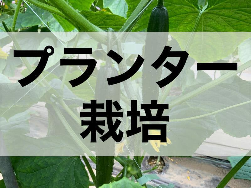 キュウリのプランター栽培に関する記事のバナーです。