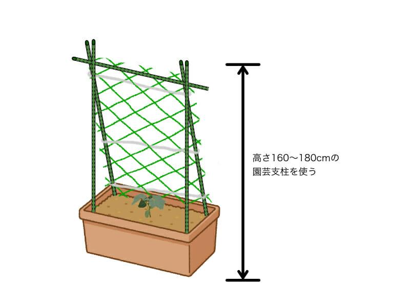 キュウリのプランター栽培におけるネットの張り方を示した画像です。