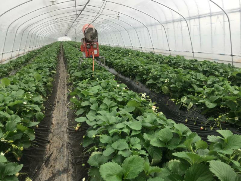 イチゴのハウス栽培の様子です。炭酸ガス(CO2)発生器も備えています。
