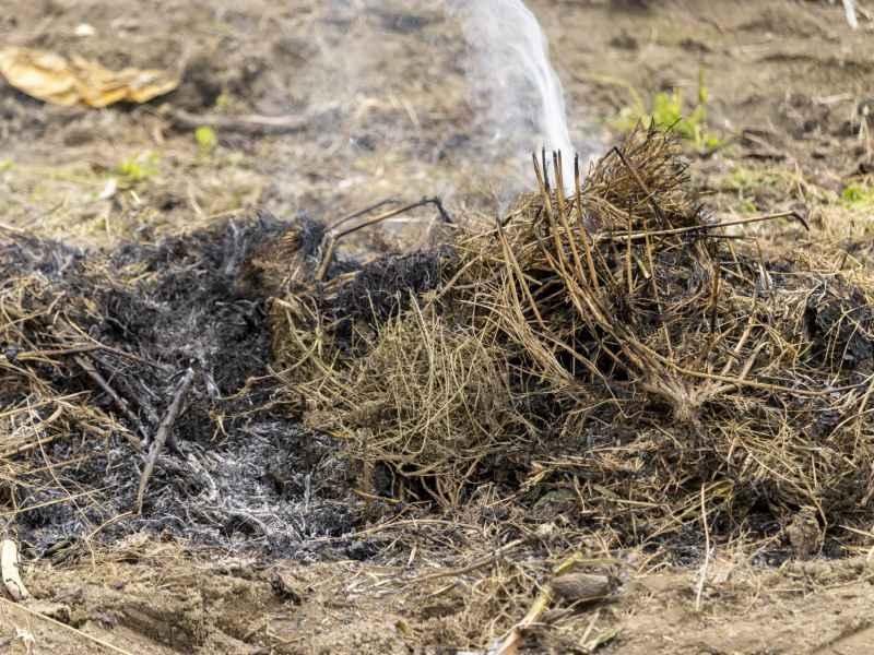 【画像】灰肥料は、油粕、牛ふん、鶏ふんなどと同じ有機質肥料でありながら、防虫、虫除け、害虫忌避効果も持ち合わせている優れた資材