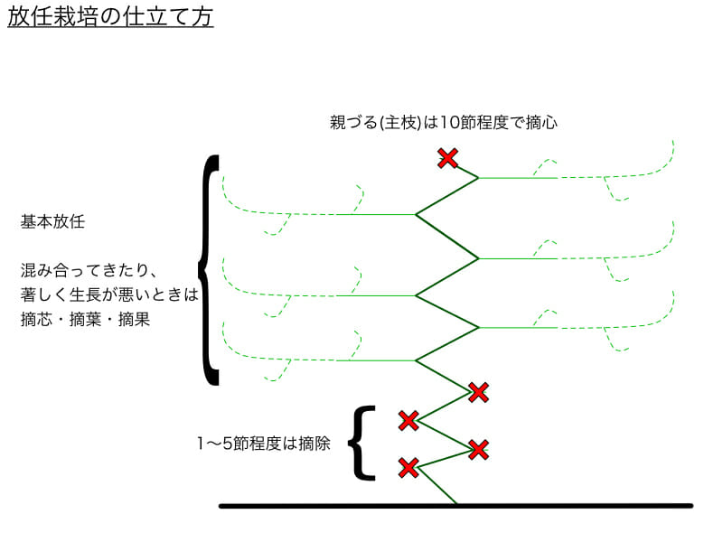 キュウリの放任栽培の仕立て方の例を表したイラストです。