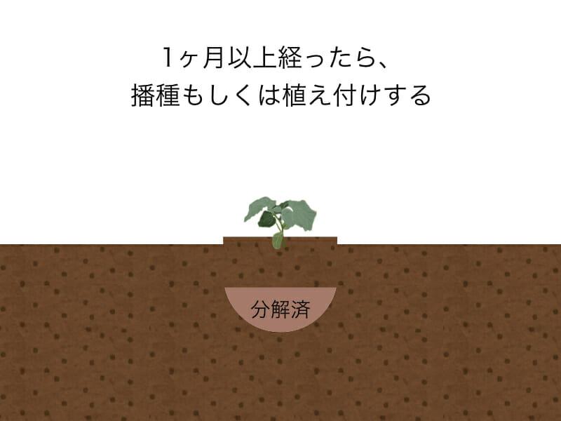 生ゴミをそのまま肥料として使用するときにする作業のイラストです。手順6:1ヶ月以上経ったら、播種または苗の植え付けを行います。
