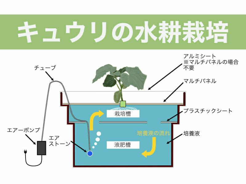キュウリの水耕栽培に関する記事のバナーです。