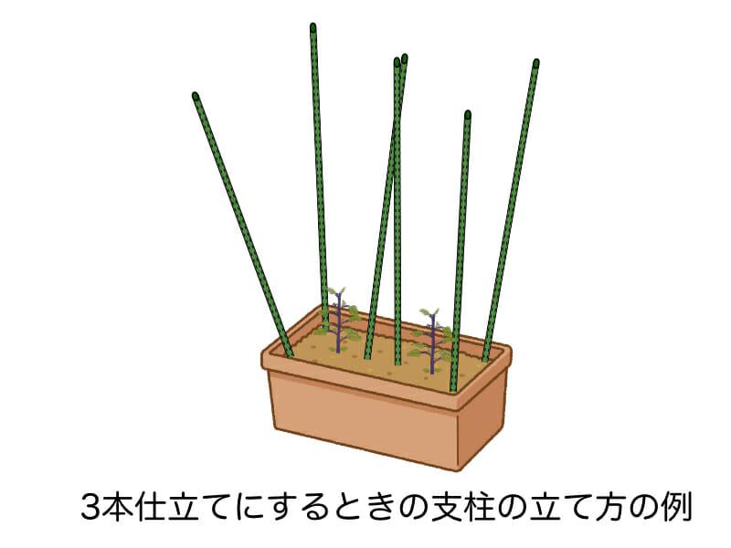 ナスのプランター栽培において3本仕立てをするときの支柱を立てる様子を示したイラストです。