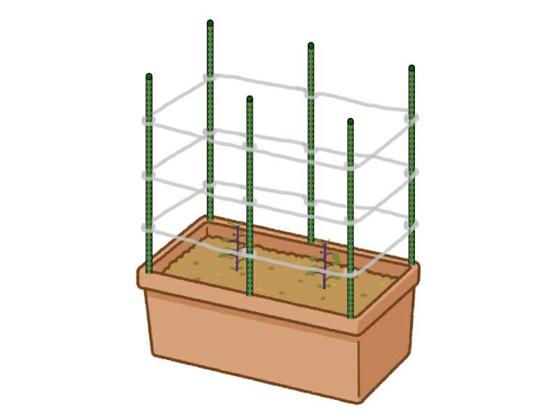 ナスのプランター栽培においてあんどん式(リング式)の方法で支柱を立てる様子を示したイラストです。