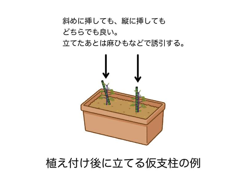 ナスのプランター栽培において植え付け後(定植後)に立てる仮支柱の立て方を示した例です。