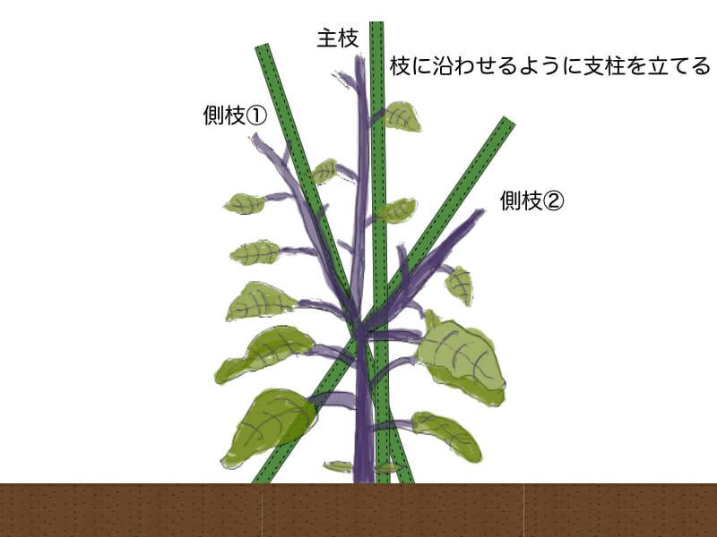 ナスの3本仕立てをするときの支柱の立て方を示したイラストです。