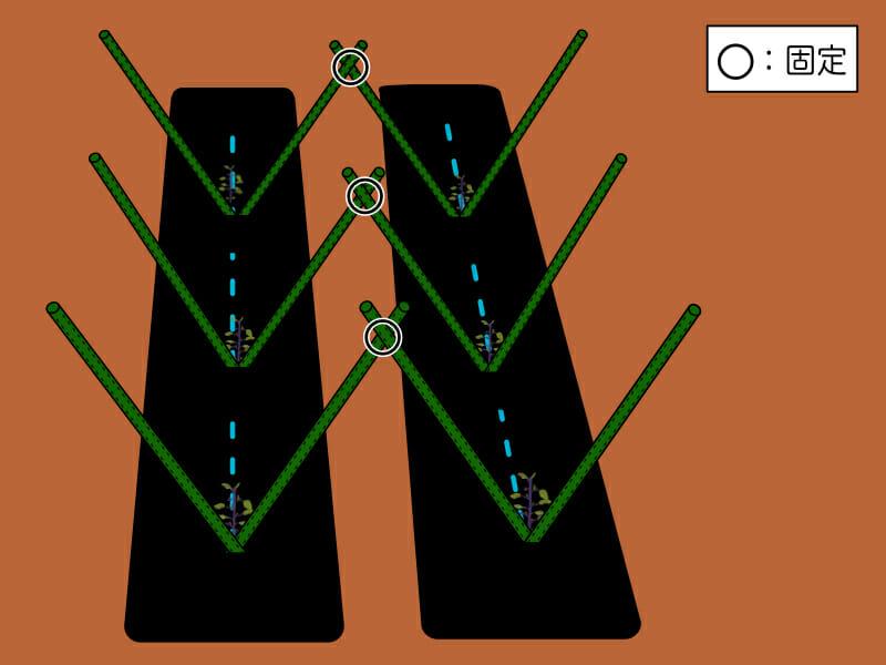 複数畝でのV字型支柱の立て方を示した画像です。